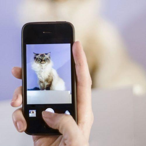 Petfluencer sind inzwischen ziemlich einflussreich. Wie Tiere zu Influencer werden und wie man damit Geld verdient.