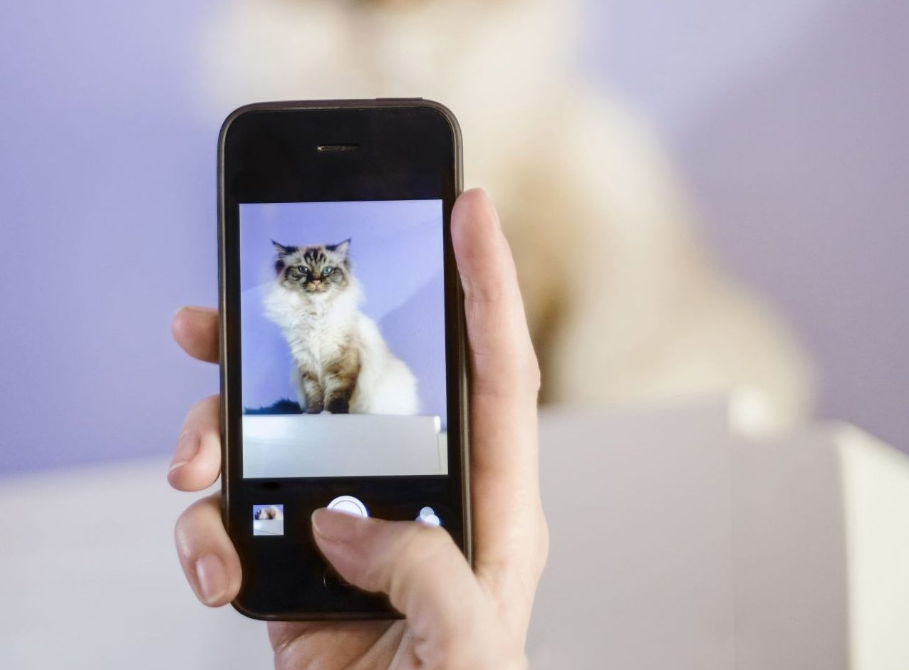 Petfluencer: So wird dein Haustier zum Influencer