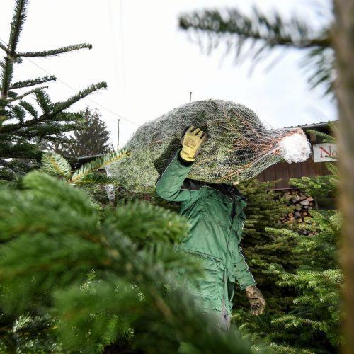 Weihnachtsbaum Verkaufsstand