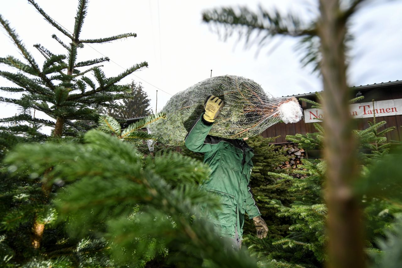 O Tannenbaum: So findest du den perfekten Weihnachtsbaum