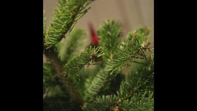 Der große Weihnachtsbaum-Check - 10s