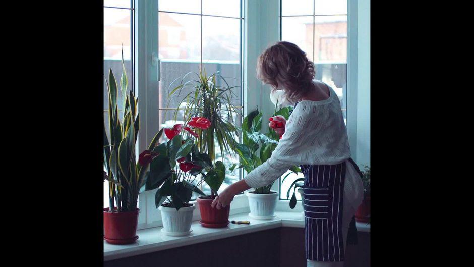 Diese Pflanzen helfen dir beim Überwintern - 10s
