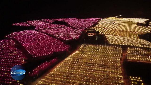 Faszinierende Bilder: Dieses Obstfeld wird nachts beleuchtet - aber warum?