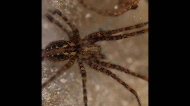 Was du schon immer über Spinnen wissen wolltest - 10s