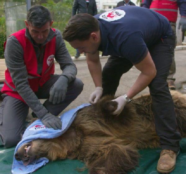 4 Pfoten für ein Halleluja: Diese Helfer retten Wildtiere aus der Gefangenschaft