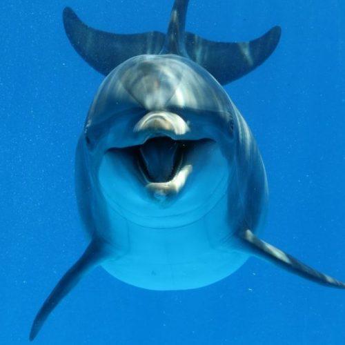 Delfin Geräusche