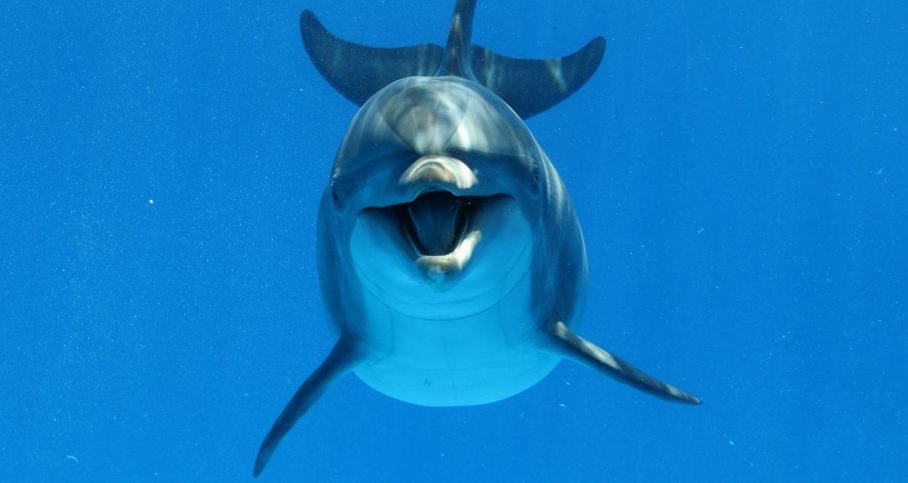 Flipper, bist du's? Darum geben sich Delfine Namen