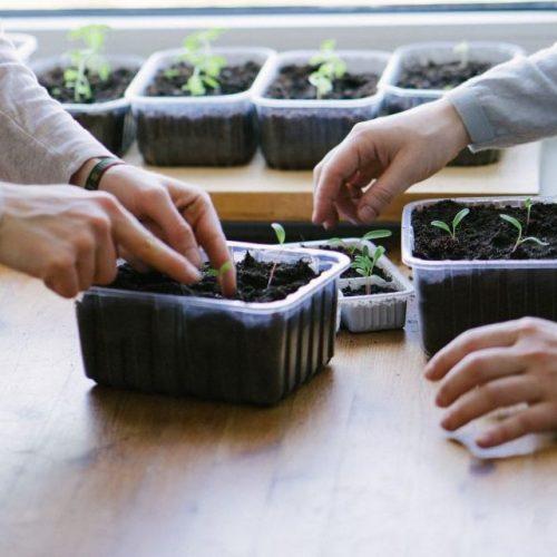 Gemüseanbau in der eigenen Wohnung