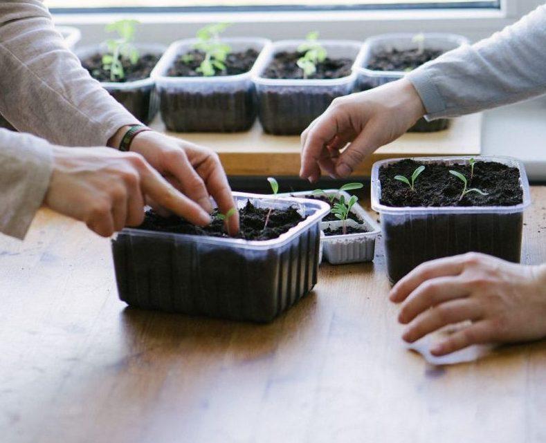 Obst und Gemüse in der Wohnung anbauen: Was sich eignet und wie es geht