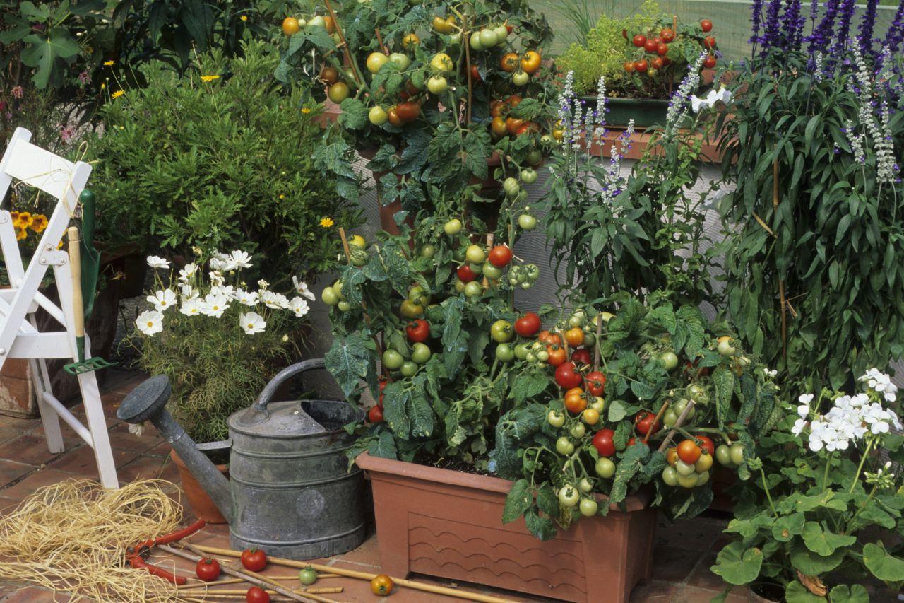 Tomaten auf Balkon anpflanzen