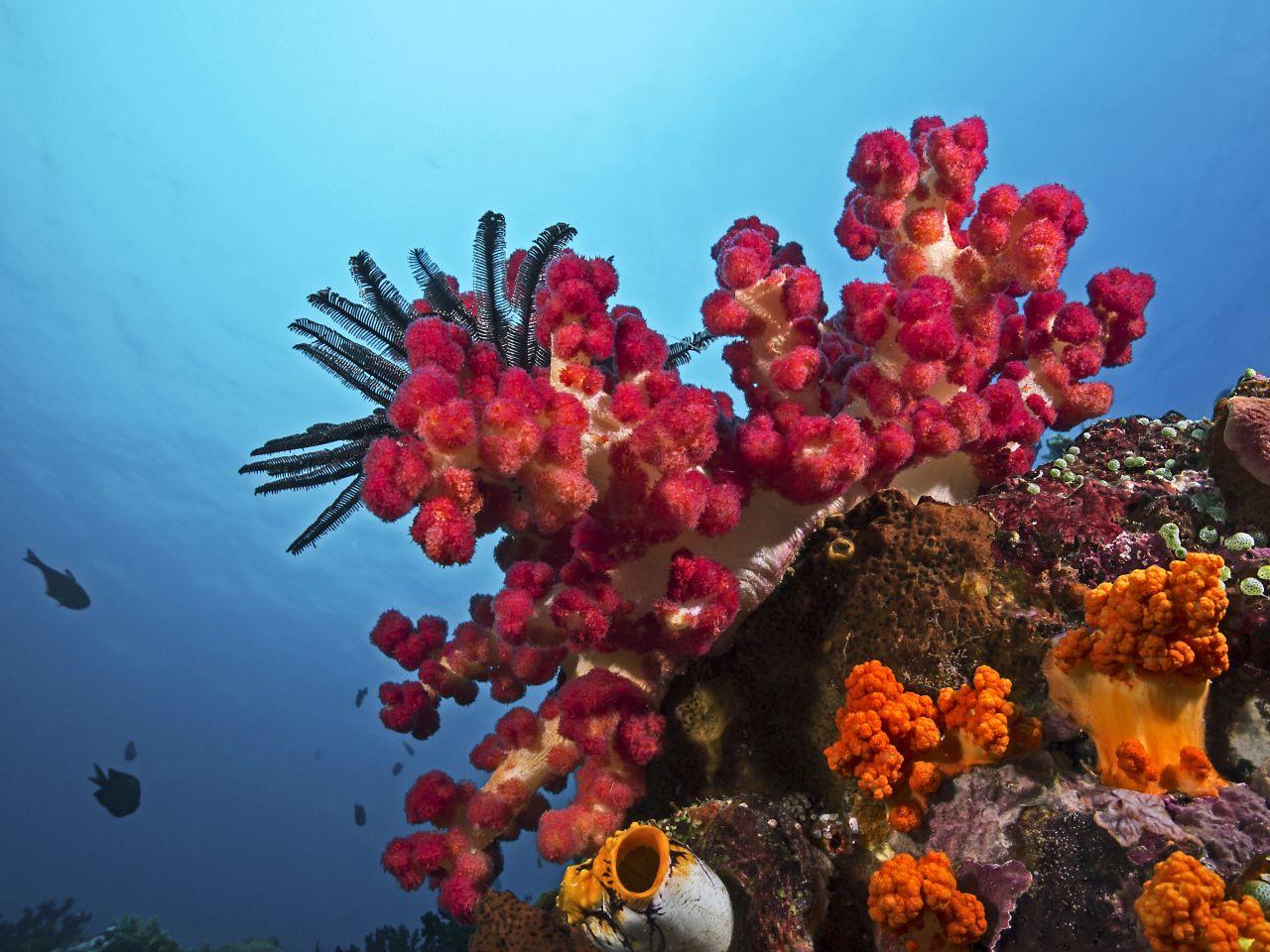 Korallenriffe erholen sich von Bleiche