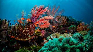 Koralle Photosynthese