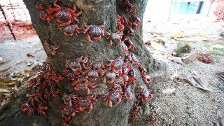 Vorausgesetzt sie treffen nicht auf ihren natürlichen Feind: die Gelbe Spinnerameise.