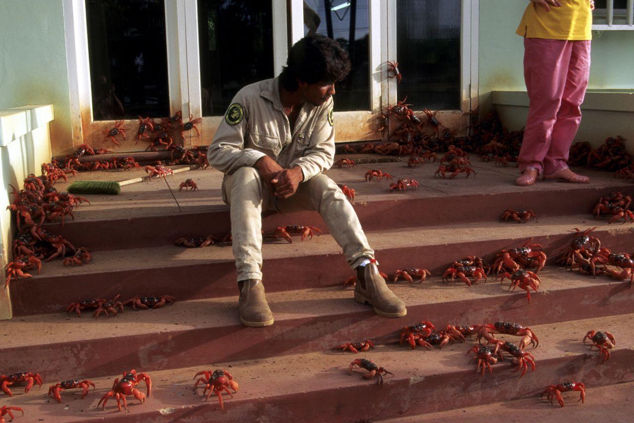 Mit ihren 10 beweglichen Gliedmaßen gelingt es den Krabblern diverse Hindernisse zu überwinden.