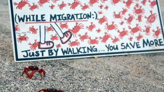 Mit Schildern wird darauf hingewiesen, dass Einheimische und Touristen die Schalentiere schützen können, indem sie sich nur zu Fuß fortbewegen.
