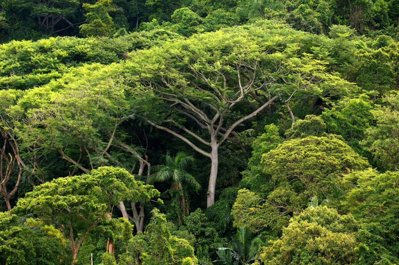 Regenwald in Costa Rica ist gewachsen