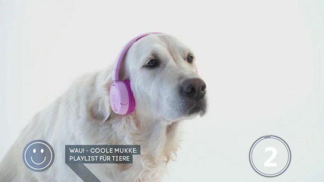 Beats für Bello & Co.: Was kann die Musik-Playlist für Tiere?