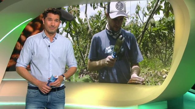 X-Days Kakao-Ernte: Wie hart ist die Arbeit als Kakao-Bauer?