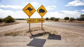 Viele australische Tiere sind vom Aussterben bedroht