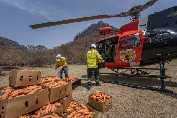 Karotten werden verladen
