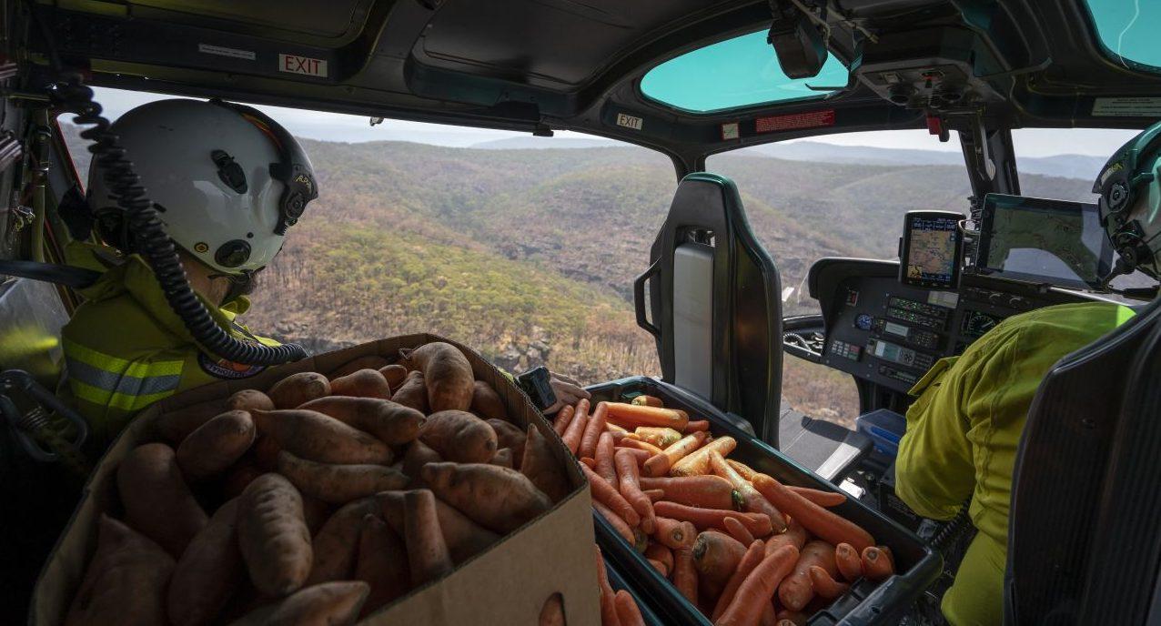 Karotten-Bomber über Australien