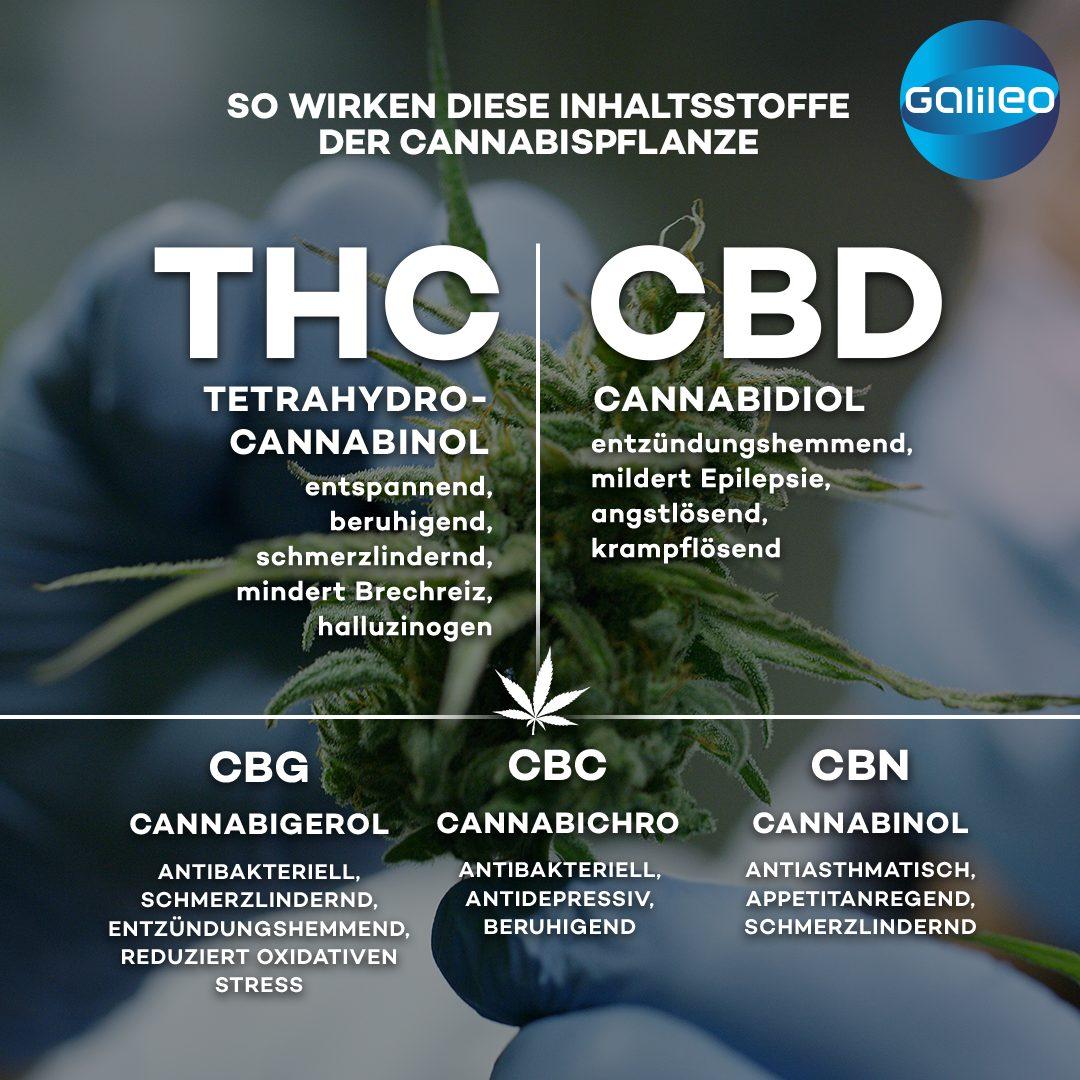 Wirkung Inhaltsstoffe Cannabis
