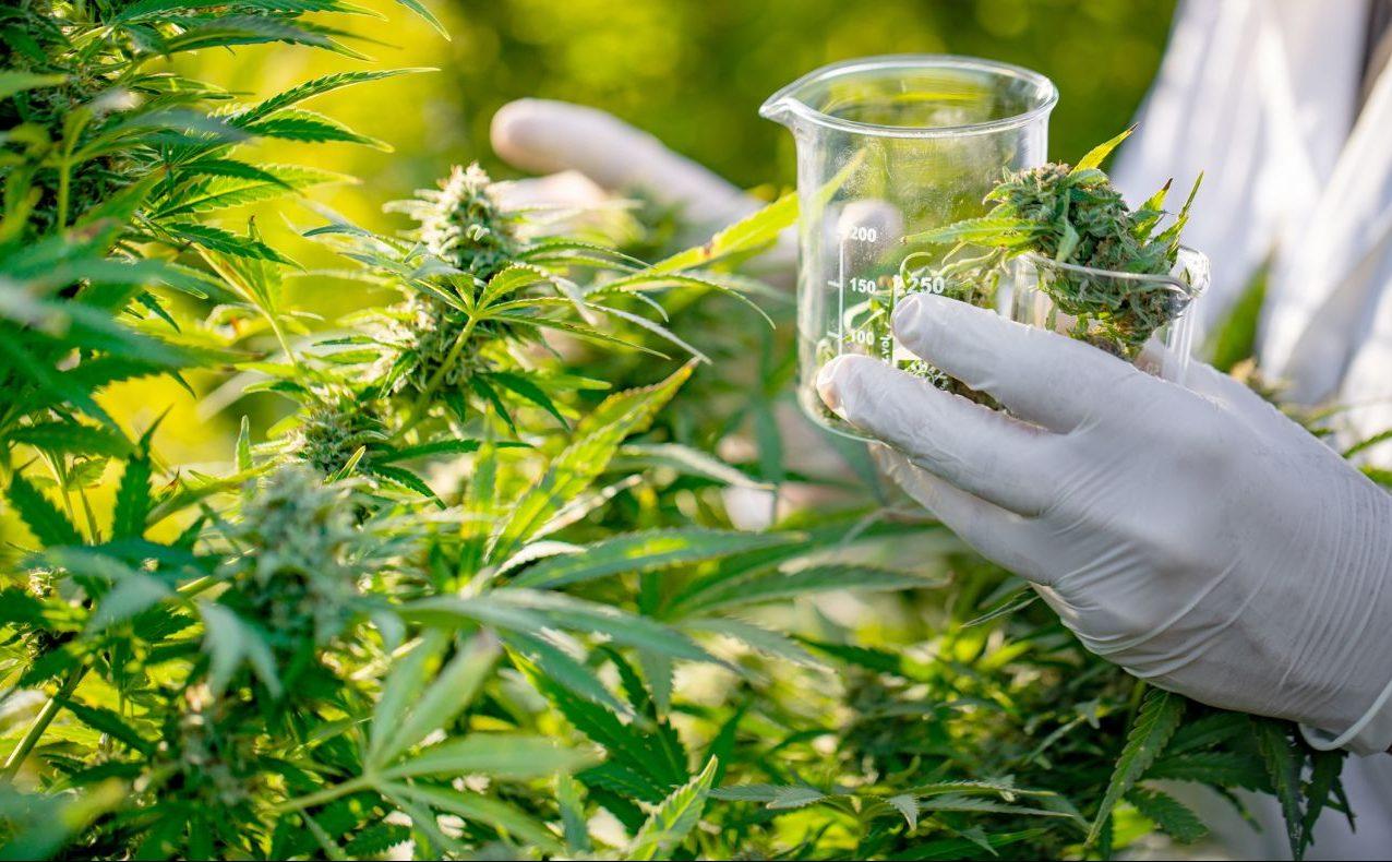 Cannabis in Deutschland: Als Medizin legal, an der Börse hoch gehandelt