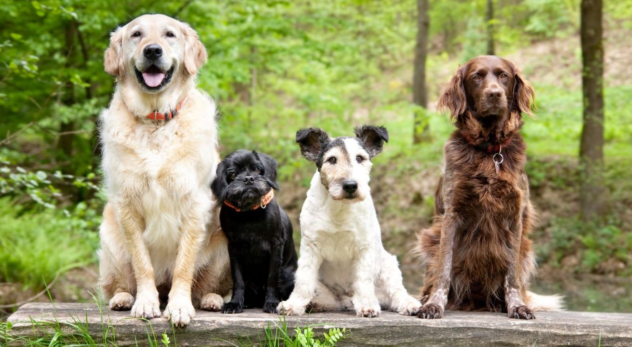 Hundejahre: Wie alt ist mein Hund in Menschenjahren?