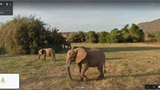 Ein Foto einer Elefantenfamilie in einem kenianischen Nationakpark.