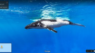 Ein Buckelwal unter Wasser