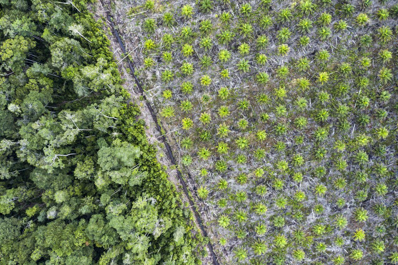 Schädlich für Mensch und Natur: Ist Palmöl wirklich so kritisch?