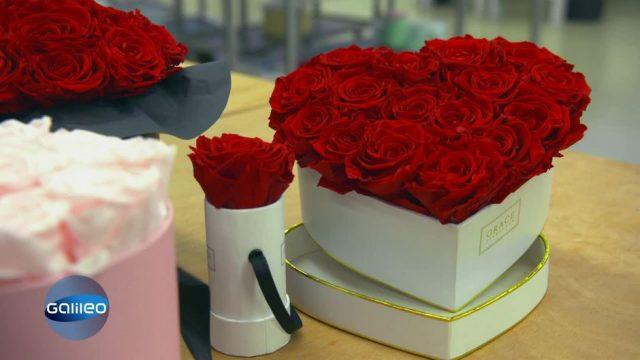 Infinity Rosen: Warum können diese Blumen nicht verblühen?