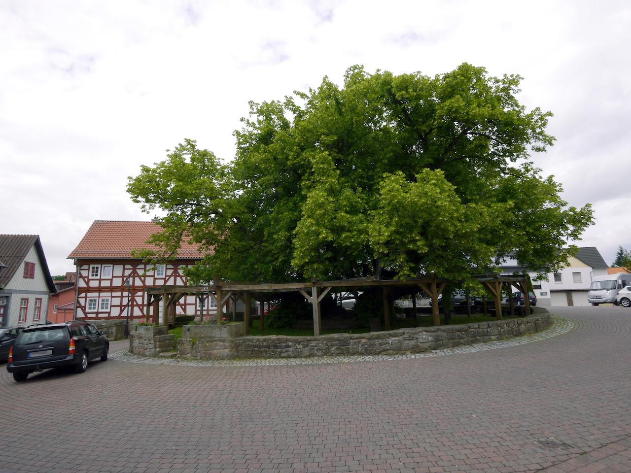 Älterster Baum deutschlands