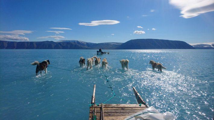 Schlittenhunde laufen in Grönland durchs Wasser