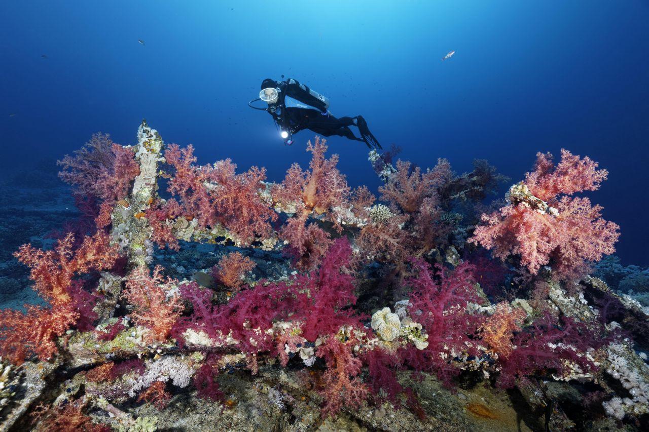 Bikini Inseln: Eine einzigartige Unterwasserwelt rundum das Bikini-Atoll ist ein MUSS für Taucher.