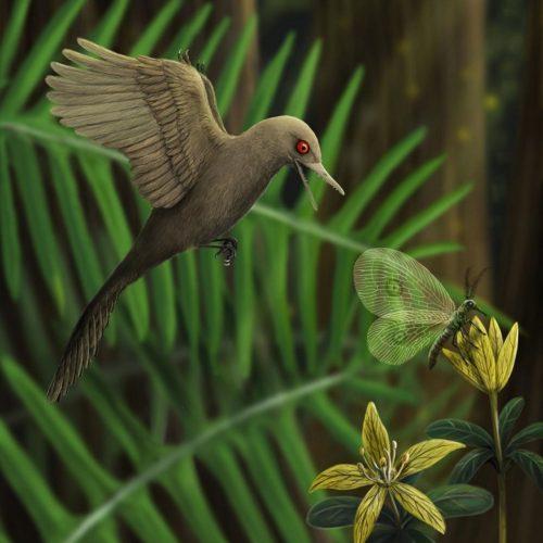 Der Mini-Dinosaurier war so groß wie der kleinste heute lebende Kolibri.