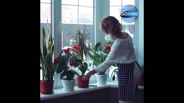 Diese Pflanzen helfen dir beim Überwintern