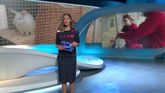 Samstag: Von wegen Schmusejob: Pfleger in Deutschlands größtem Tierheim