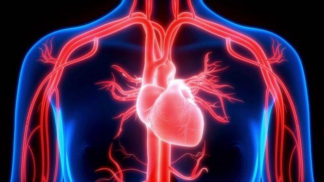 So funktioniert unser Herz - 10s
