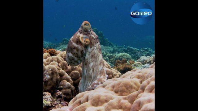 So sieht es aus, wenn ein Oktopus träumt