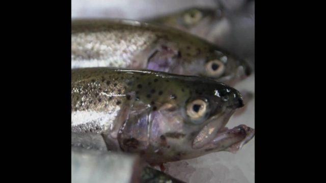 Welcher Fisch ist der beste? - 10s
