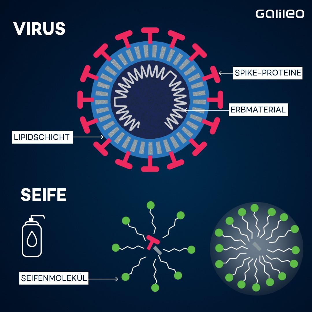 So wirkt Seife gegen Viren