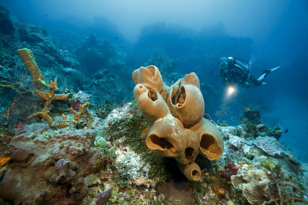 Das älteste Lebewesen ist wohl ein Riesenschwamm im antarktischen Meer, Alter: über 10.000 Jahre.