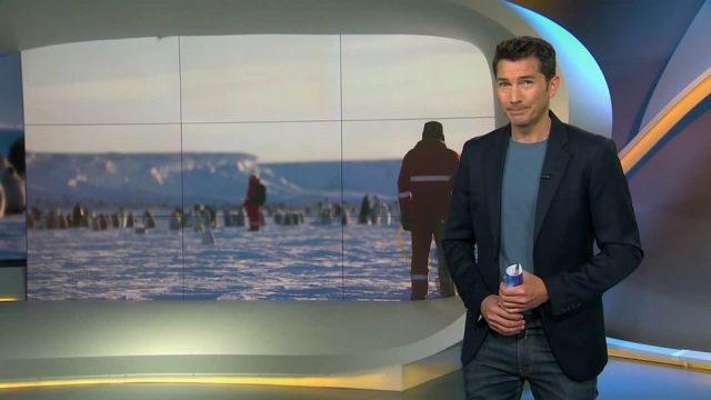 Dienstag: Auf den Spuren der Pinguinforscher