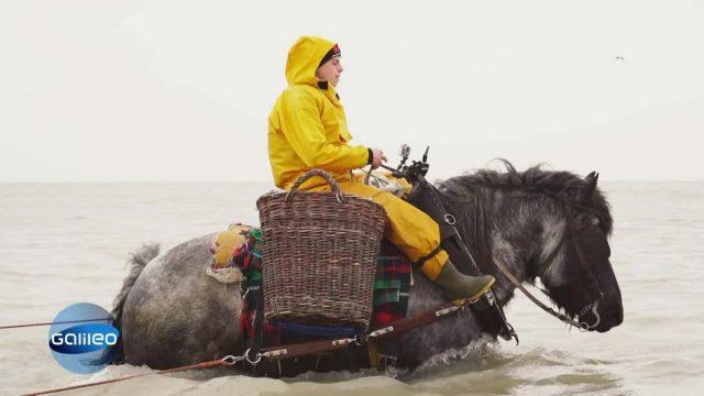So arbeiten die Pferdefischer der Nordsee