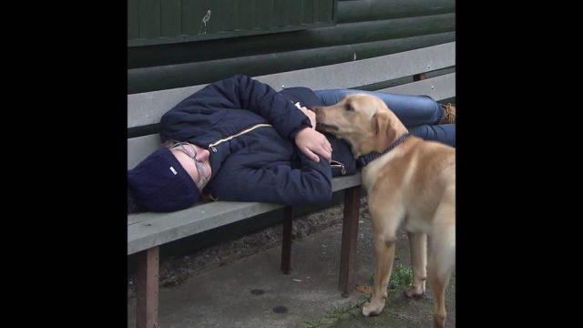 Tierisch gute Helfer: Hunde im Einsatz - 10s