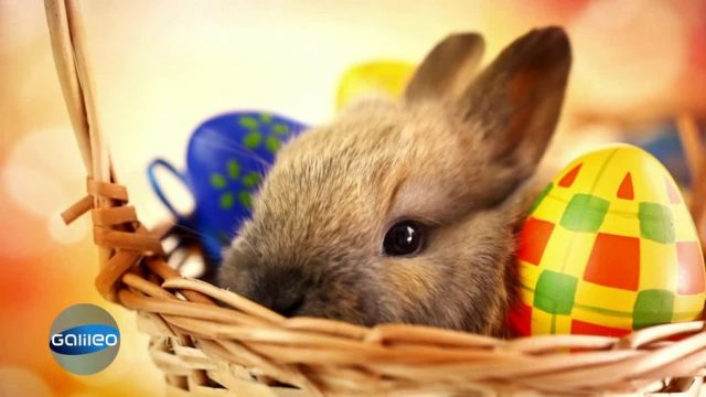 Was hat der Hase mit Ostern zu tun? 5 Geheimnisse über das Osterfest