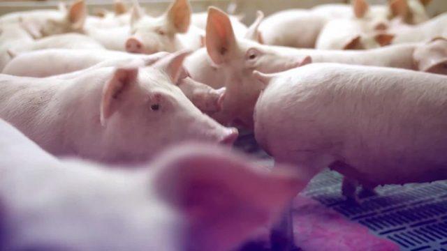 Was wurde eigentlich aus der Schweinegrippe?