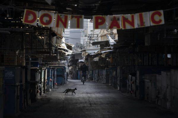 Katze läuft über geschlossen Markt