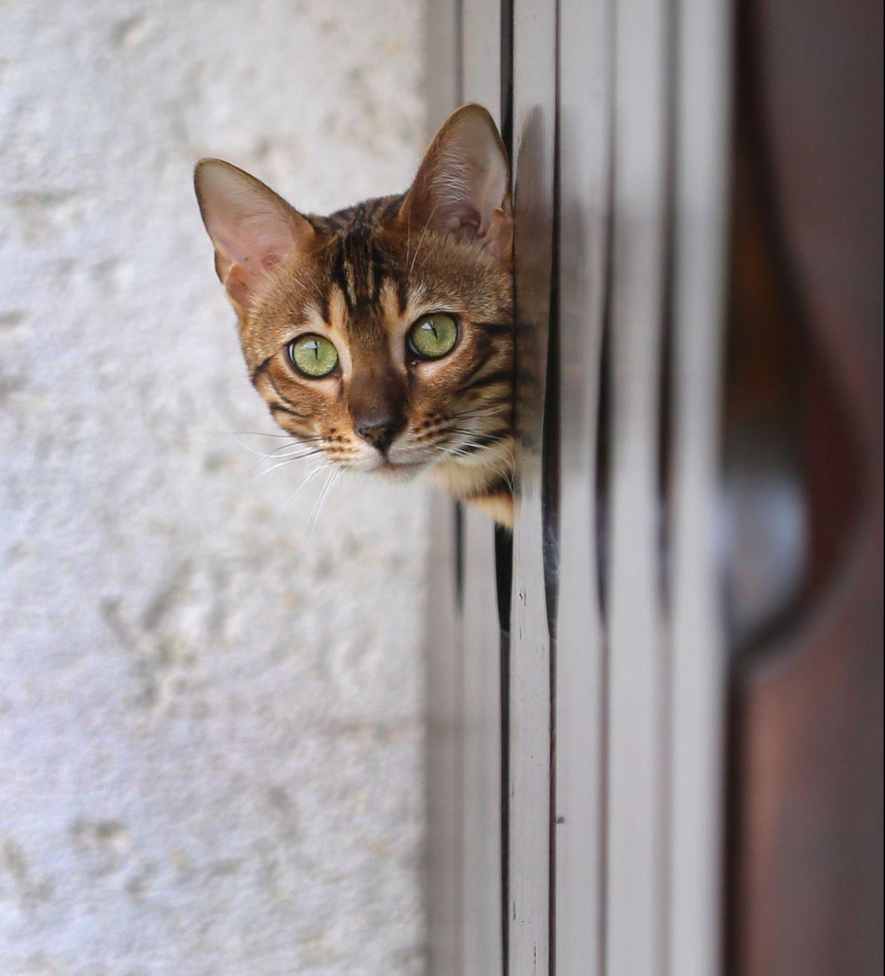 Katzen haben eine besonders hohe Anzahl von lichtempfindlichen Stäbchen auf ihrer Netzhaut. So können sie auch bei schlechten Lichtverhältnissen gut sehen.